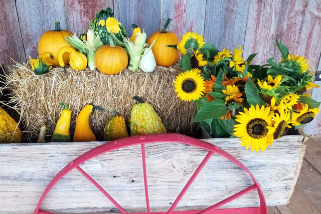 Fall decor at the Farm Market