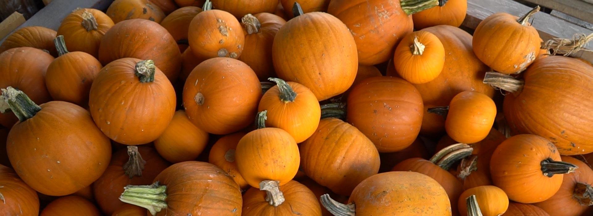 Pumpkins & Fall Décor