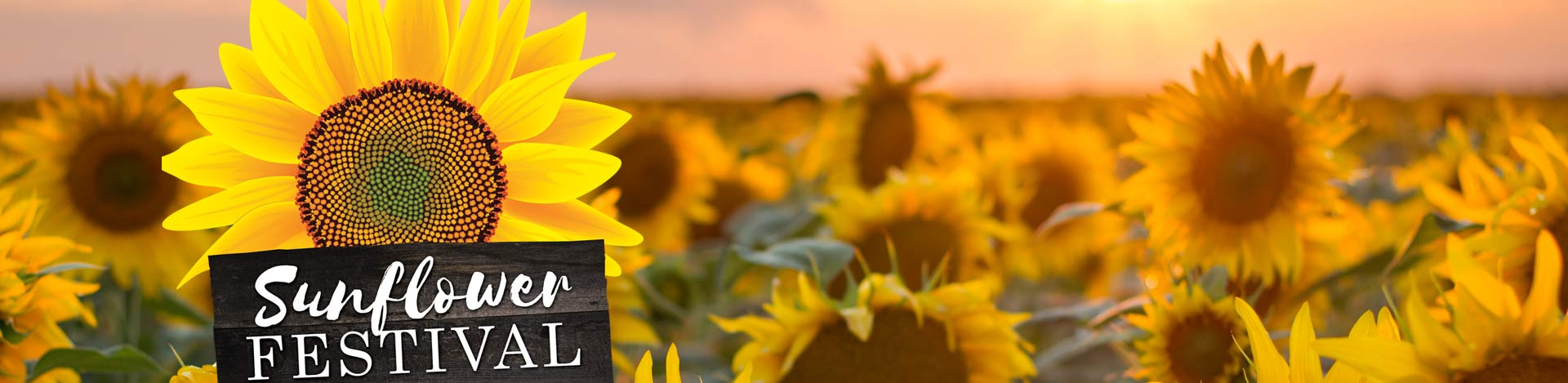 Sunflower Festival at Country Roads Family Fun Farm